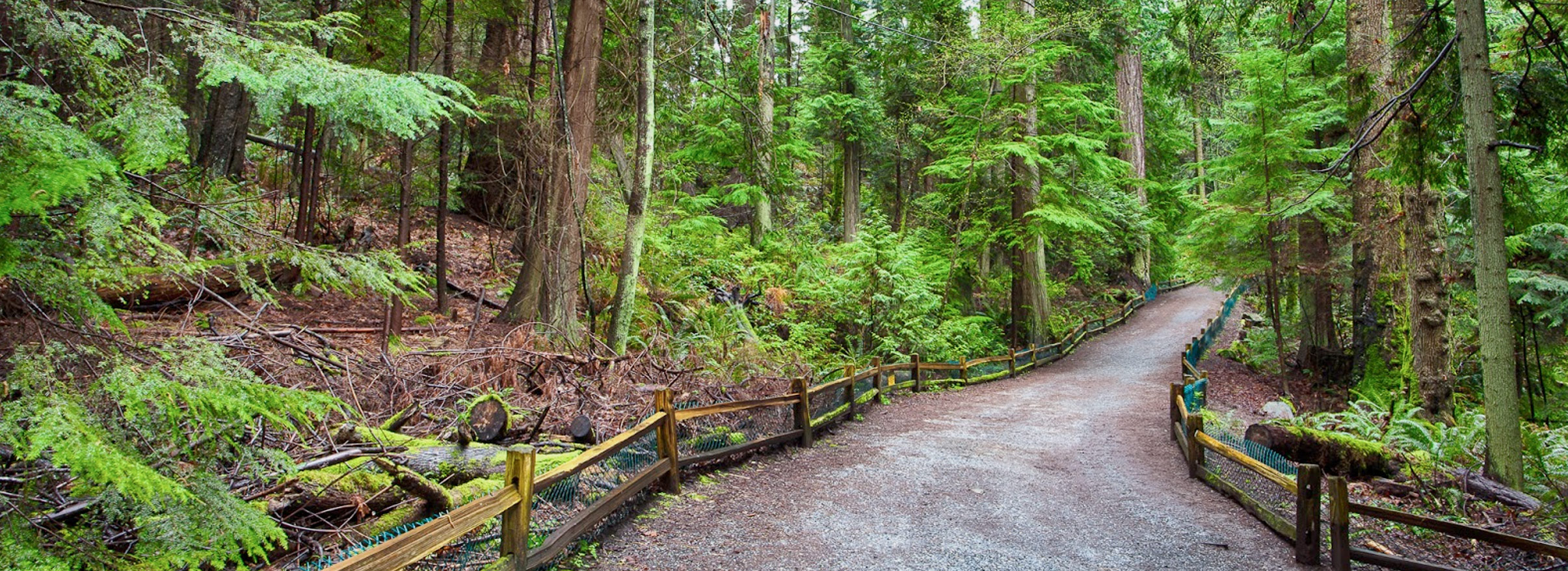 west-vancouver-forest